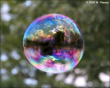 Bubble in the Woods