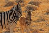 Mother and child zebras at Etosha National Park
