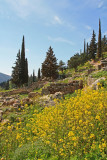 The wildflowers at Delphi