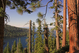 The Coniferous Trees around Lake Tahoe