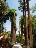 Palm trees at the Botanical Garden