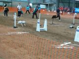 Flyball August 2006