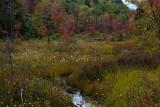 Roadside Bog