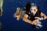 Lionfish and a diver