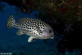 Thailand November 2007 Andaman Sea