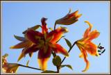 08_floral