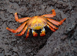 Invertebrates of Galapagos