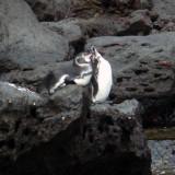 Penguins-Cormorants