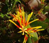 Utuana Reserve