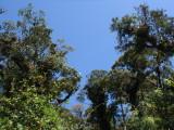 Podocarpus NP