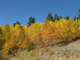 autumn_in_co