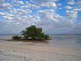 Mangrove Tree Greets Morning
