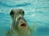 Potato Fish