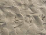 Birdy foot prints - Het Zwin