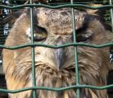 Wise old owl - Het Zwin