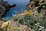 Porquerolles Island flowers (2008)