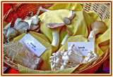Oyster, Enoki & Beech mushrooms for sale at Kennett Mushroom Festival