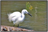 Egret in the Camargue (2010)