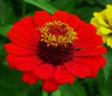 P1000942redflower.JPG