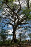 P1050830tree.JPG