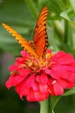 My Favorites June 2009, Nicaragua