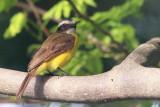 IMG_3222BIRD.JPG