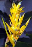 DSC01525flower.jpg