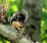Squirrel in Omar Park