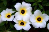 Flower on Taboga Island