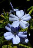 IMG_1347bflower.JPG
