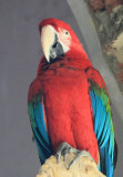 IMG_1706mcbird.JPG