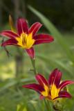 IMG_2046flowers.jpg