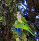 Birds In Argentina