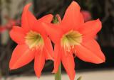 IMG_0850flower.JPG