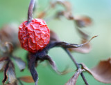 DSC01746 - Withered