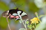 DSC01980 - Butterfly