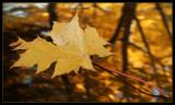 DSC02062 - Leaf on Car Roof**WINNER**