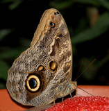 DSC01990 - Butterfly