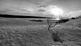 DSC00438 - Windsor Lake in Tri-X Pan