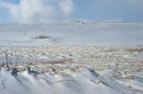 DSC02425 - In the Bleak Mid-Winter