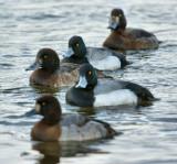 DSC06407 - Getting My Ducks In A Row...