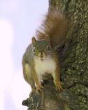 DSC07567 - Grey Squirrel Surprise