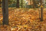 DSC00041 - Leaf Blanket