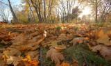 DSC00080 - Autumn - Low