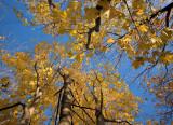 DSC00076 - Autumn - High
