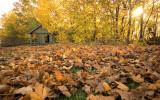 DSC00069 - More Leaves