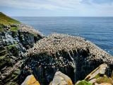 DSC08176 - The Bird Rock