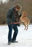 Doggy Park Frolics