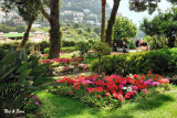 Gardens of  Augustus on Capri