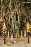 Buddha head at  Wat Maha That